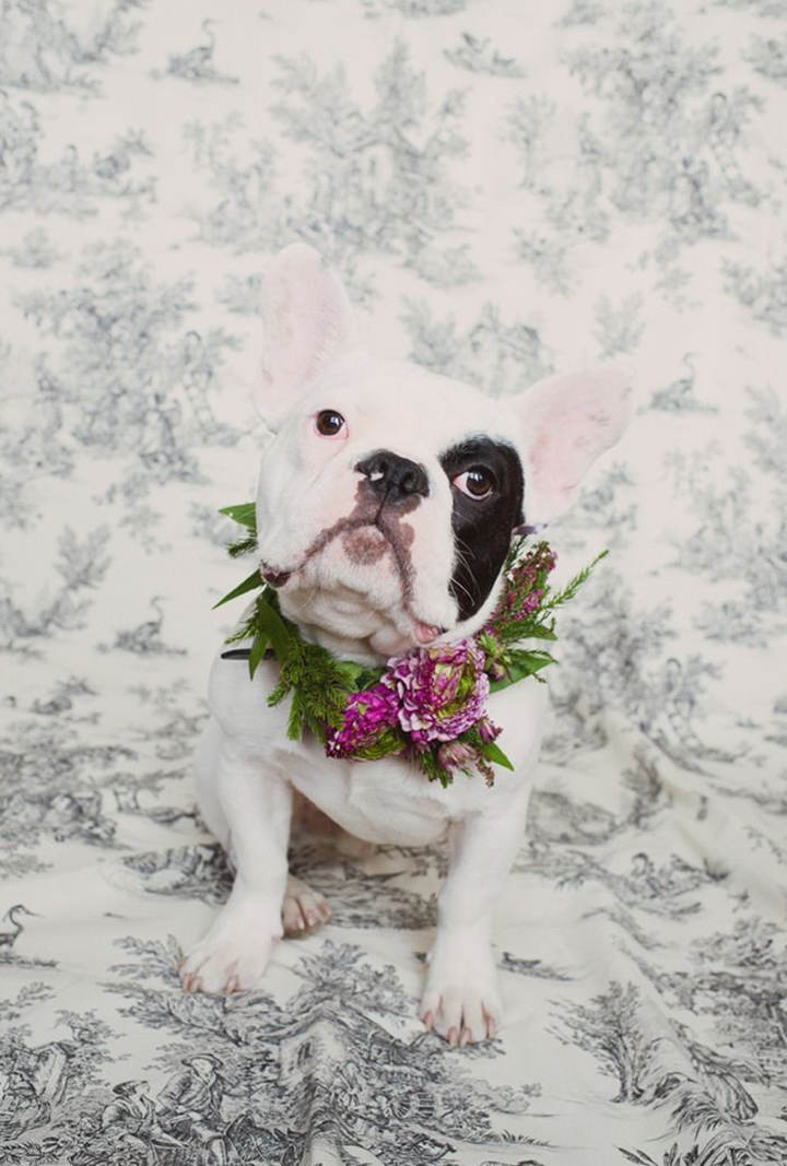 french bulldog in flower crown
