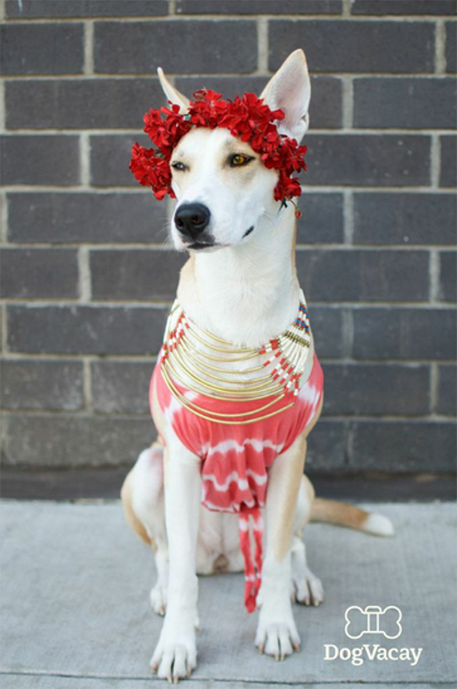 mixed breed dog in flower crown