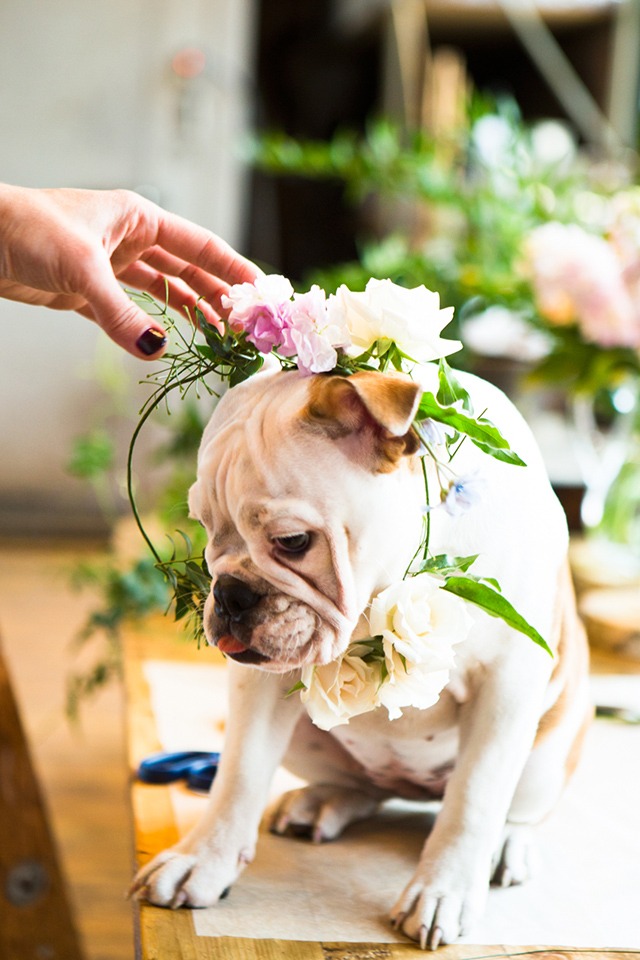 bulldog in flower crown