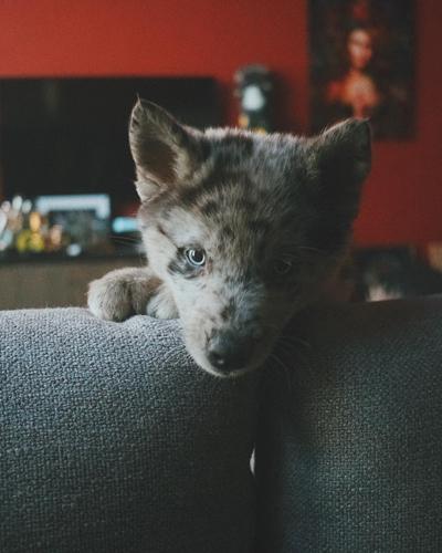 skrillex puppy
