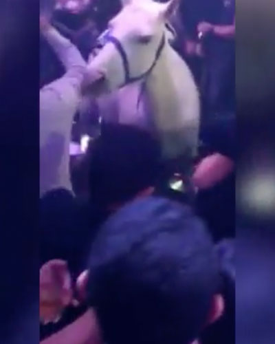 confused horse in south beach nightclub