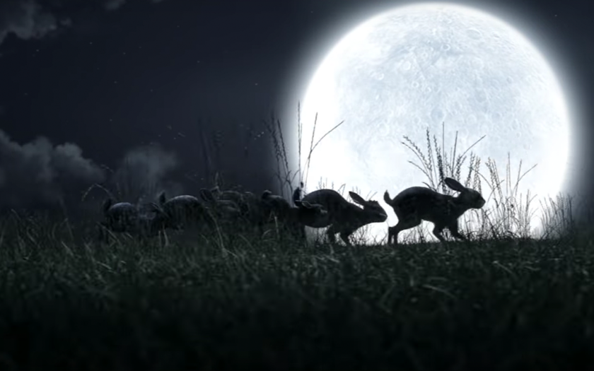 screenshot from fire on fire video of rabbits running in the moonlight